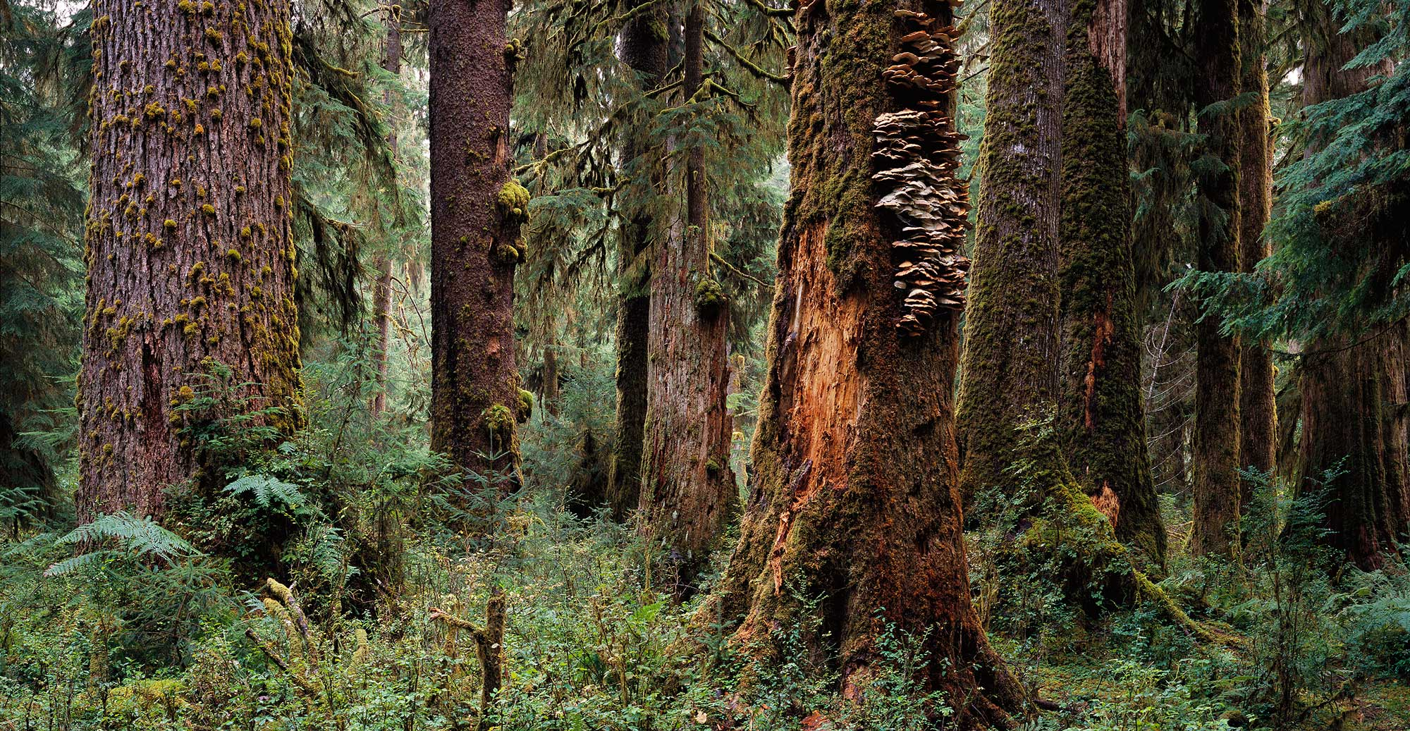 1004 Enchanted Forest, Olympic National Park, Washington