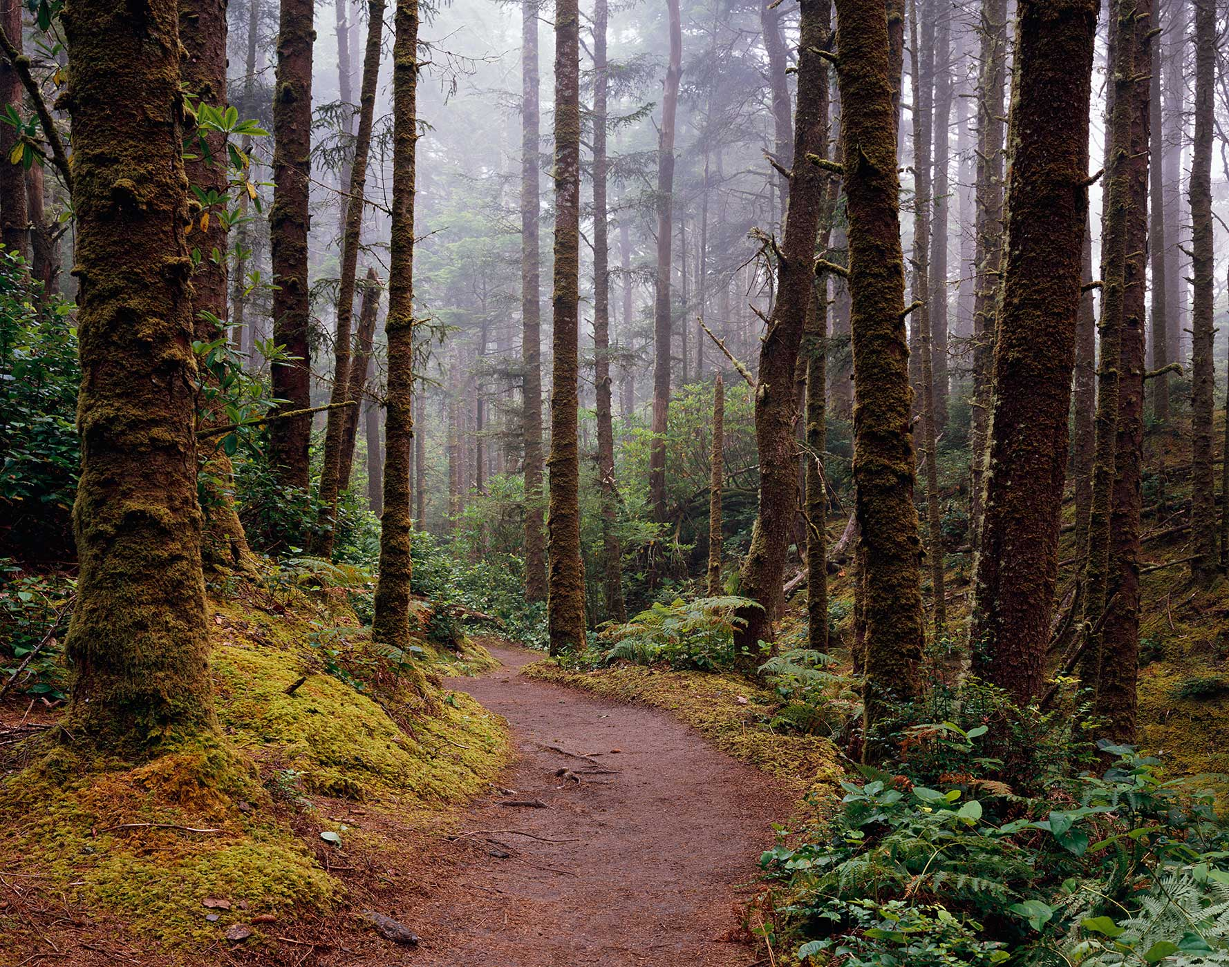 1354 The Hobbit Trail, Siuslaw National Forest, Oregon