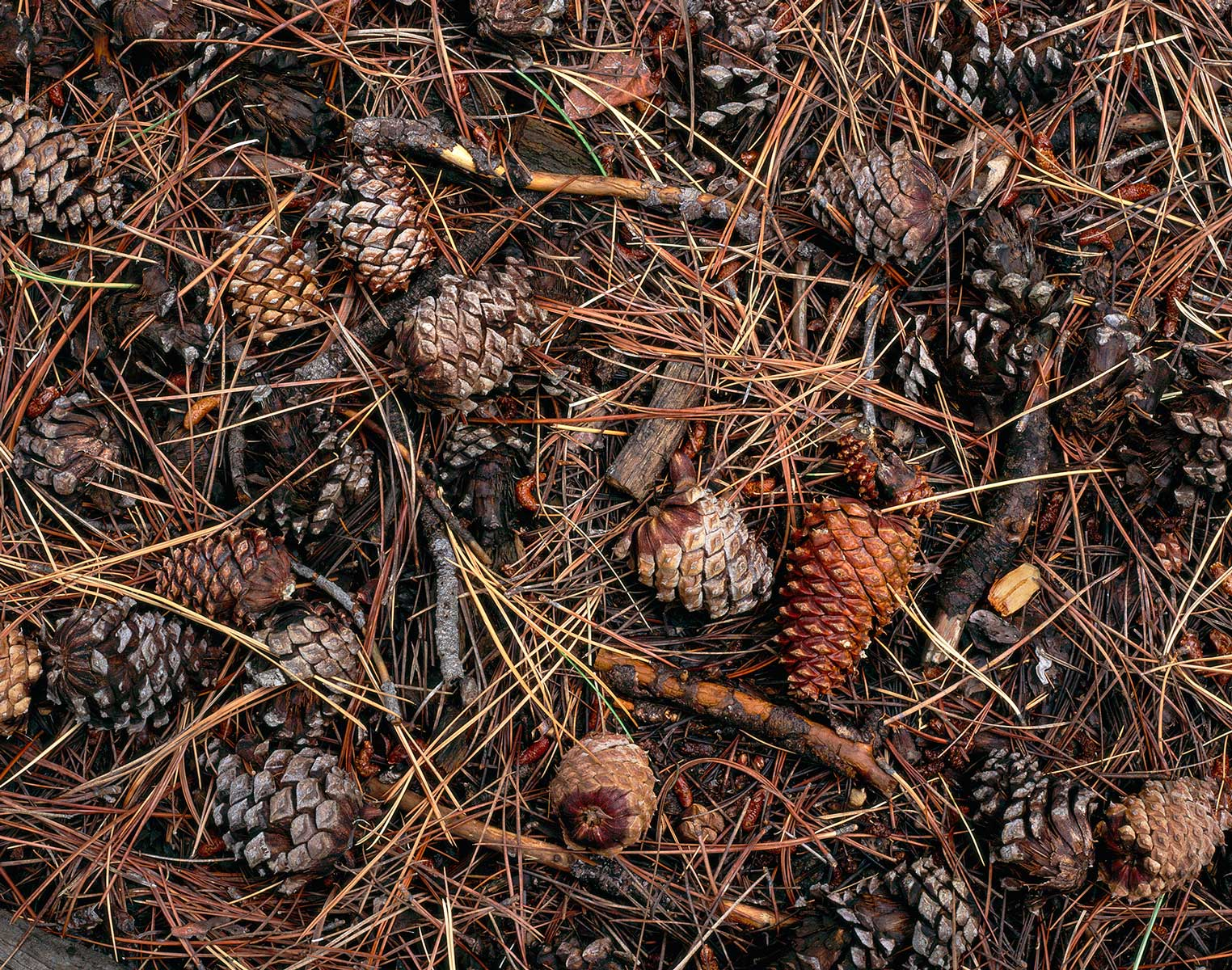 403 Needles and Cones, Kachina Peaks Wilderness, Arizona