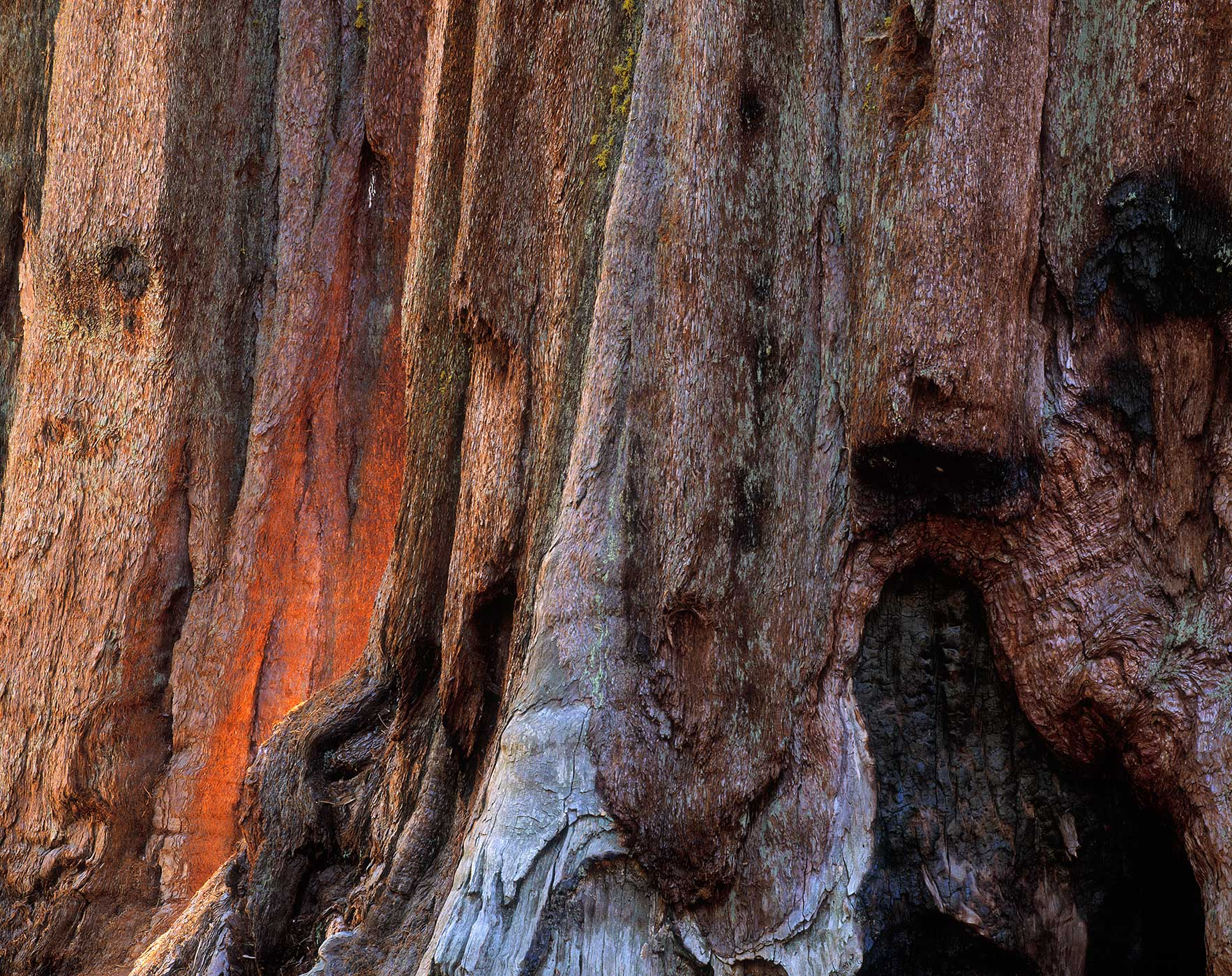 505 Sequoias, Sequoia National Park, California