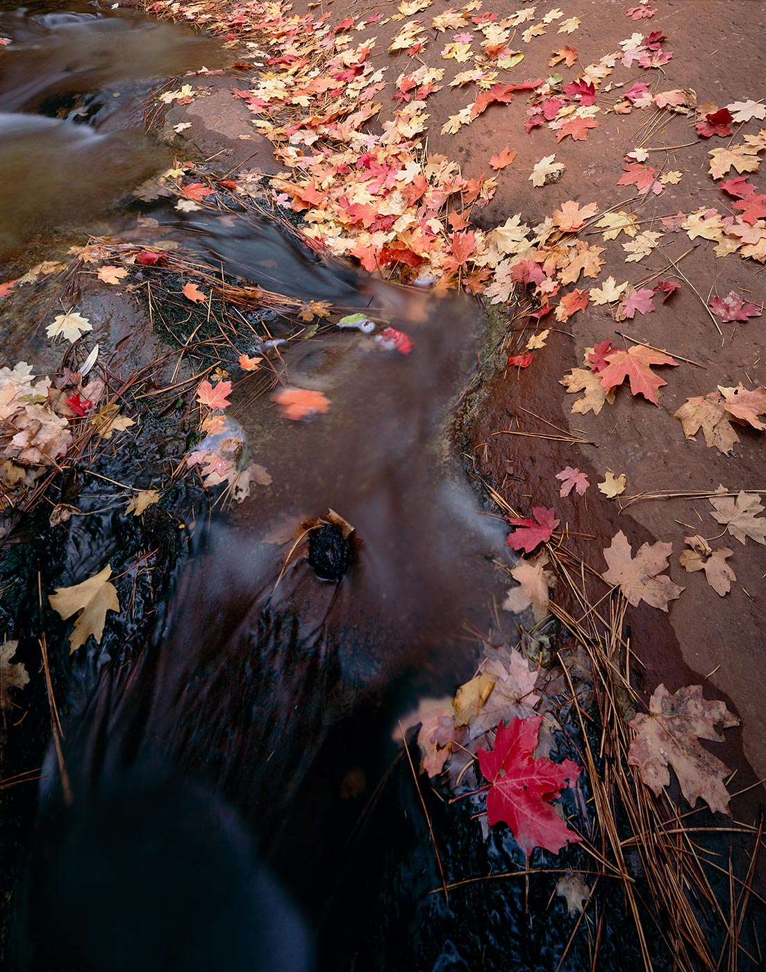 509 Maples in the Creek, Red Rock-Secret Mtn. Wilderness, Arizona