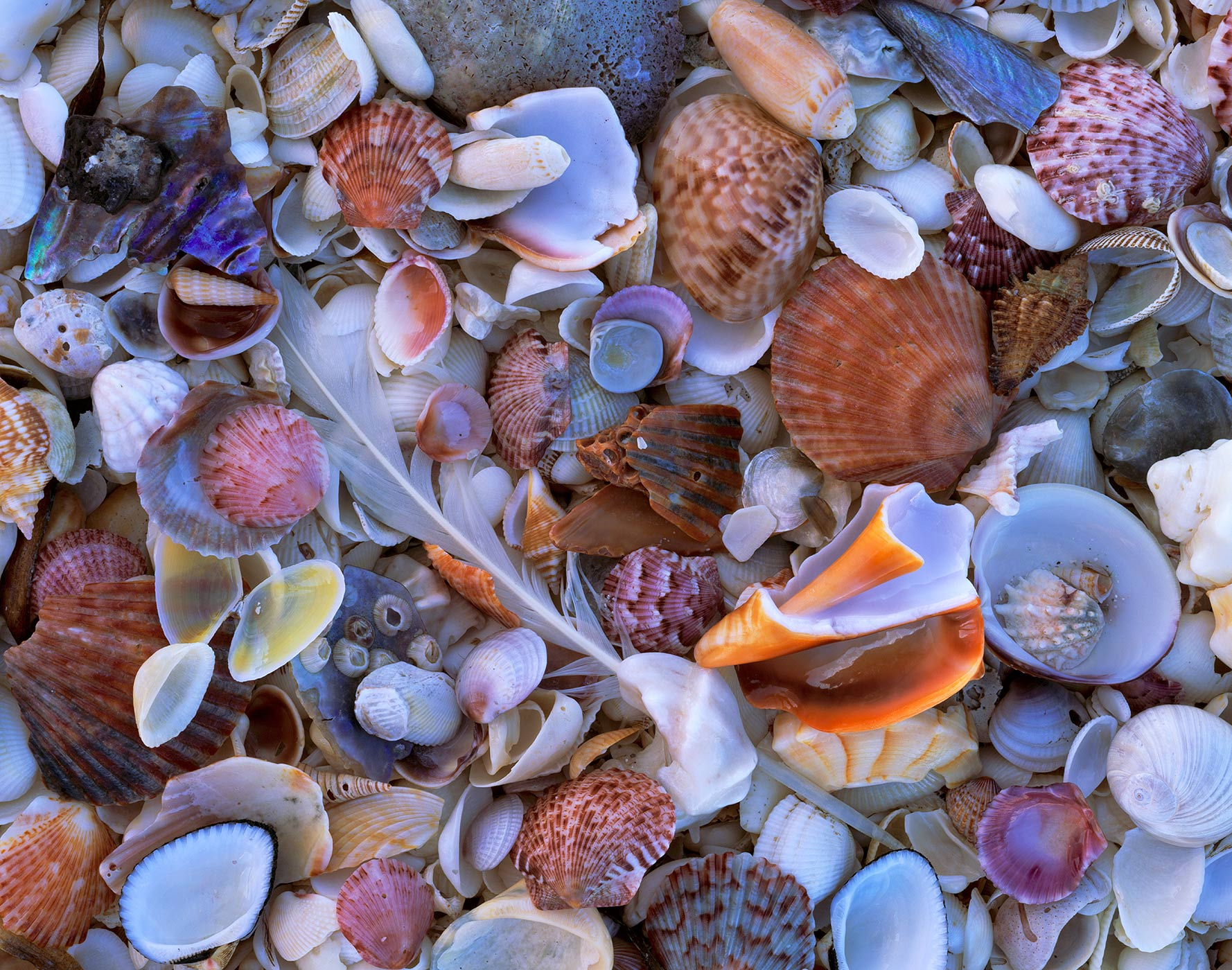 511 Shell Collection, Sanibel-Captiva Islands, Florida