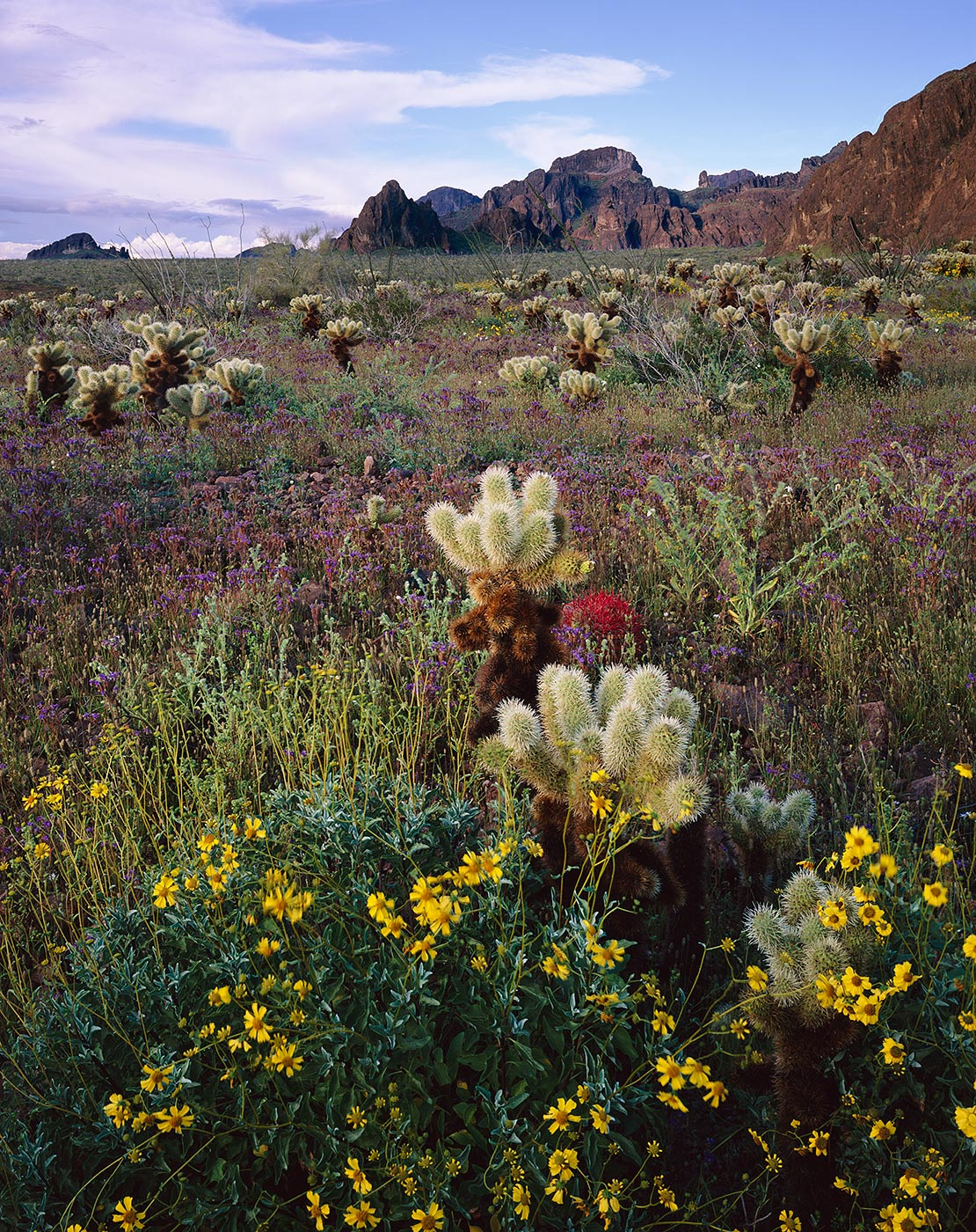 604 Flowers & Chollas, Kofa National Wildlife Refuge, Arizona