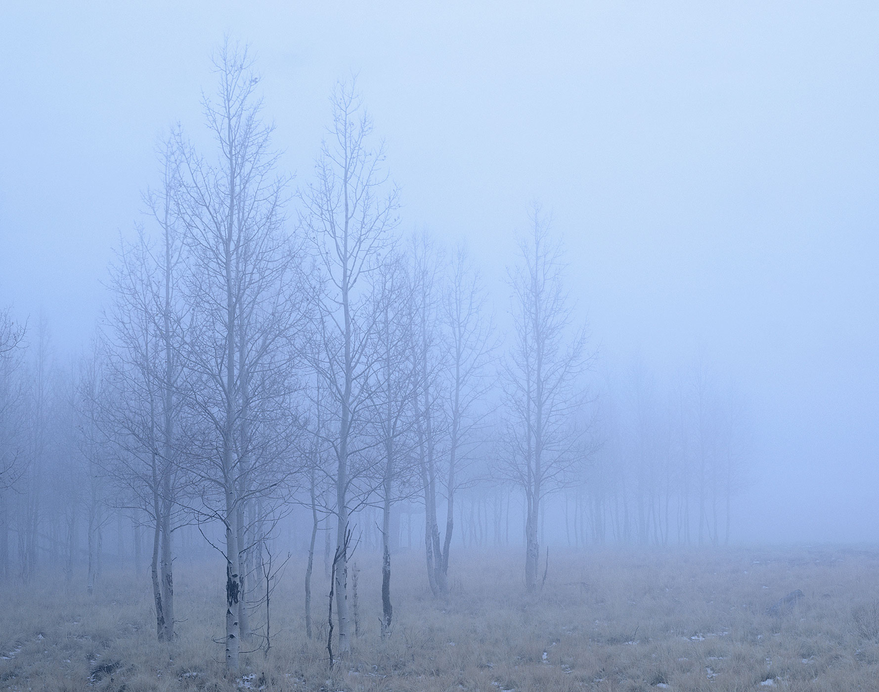 611 Winter Fog, Coconino National Forest, Arizona