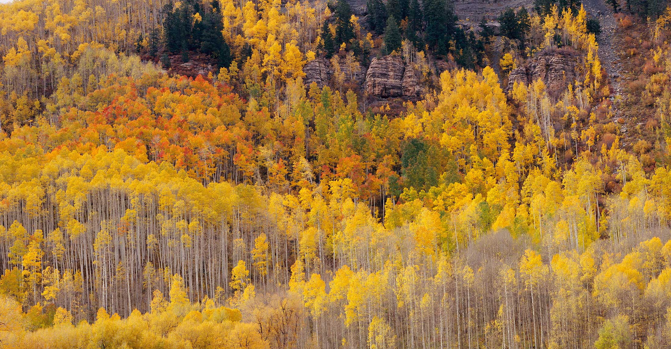 822 Hermosa Cliffs, Autumn, San Juan National Forest, Colorado